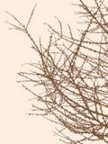 Silhouet van de boomtakken royalty-vrije illustratie