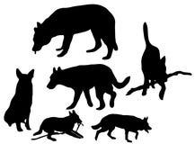 Silhouet van de honden Stock Afbeelding