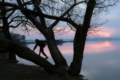 Silhouet van de jongen dat op een boom beklimt royalty-vrije stock foto's
