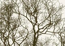Silhouet van de lentebomen royalty-vrije illustratie