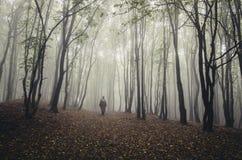 Silhouet van de mens in de herfstbos royalty-vrije stock foto