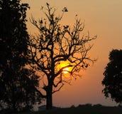 Silhouet van dode boom Stock Afbeelding