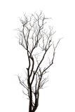 Silhouet van dode boom Stock Afbeeldingen