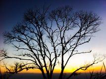 Silhouet van dode boom Stock Foto's