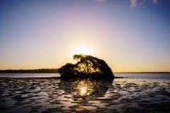 Silhouet van dode boom royalty-vrije stock afbeeldingen