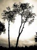 Silhouet van dode boom Stock Illustratie