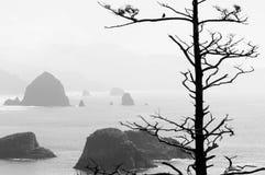 Silhouet van dode boom en vogel Royalty-vrije Stock Fotografie