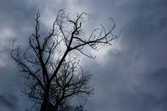 Silhouet van dode boom zonder bladeren met de donkere hemel op rug Stock Foto's