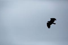 Silhouet van een adelaar Stock Foto