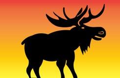 Silhouet van een Amerikaanse eland bij Zonsondergang Stock Foto