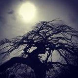 Silhouet van een Aziatische boom met de zon Royalty-vrije Stock Fotografie
