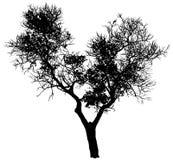Silhouet van een boom Royalty-vrije Stock Afbeeldingen