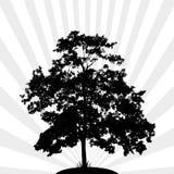 Silhouet van een boom Royalty-vrije Stock Afbeelding