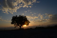 Silhouet van een boom bij zonsondergang Royalty-vrije Stock Foto's