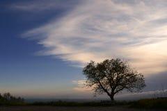 Silhouet van een boom bij zonsondergang Royalty-vrije Stock Afbeelding