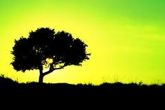 Silhouet van een boom met gele en groene achtergrond - ecologie Royalty-vrije Stock Foto's