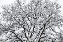 Silhouet van een boomclose-up Bloem in de sneeuw Royalty-vrije Stock Foto's