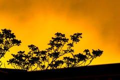 Silhouet van een dak en boom-takken, tegen een heldere gele vurig-kijkt hemel stock fotografie