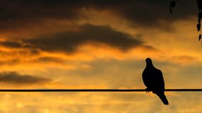 Silhouet van een Duifzitting vreedzaam op Draad stock fotografie