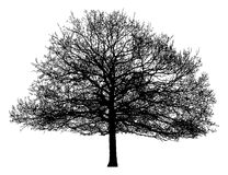 Silhouet van een eenzame boom royalty-vrije illustratie