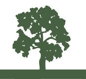 Silhouet van een eiken boom Stock Foto
