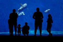 Silhouet van een familie het letten op dolfijn Royalty-vrije Stock Fotografie