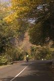 Silhouet van een fietser in de herfst op een zonnige middag stock afbeelding
