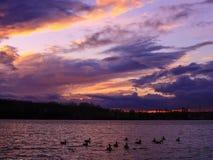 Silhouet van een groep eenden onbeweeglijk op het water royalty-vrije stock afbeelding