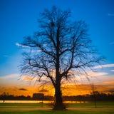 Silhouet van een grote boom bij zonsondergang Stock Afbeeldingen