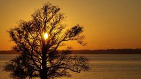 Silhouet van een grote oude eik bij het meer in zonsondergang royalty-vrije stock fotografie