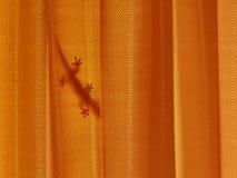 Silhouet van een hagedis achter oranje gordijn Royalty-vrije Stock Afbeelding