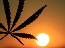 Silhouet van een hennepblad op zonsondergang stock foto