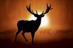 Silhouet van een hert in zonsondergang Stock Foto's