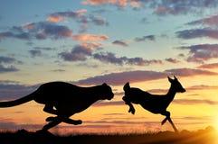 Silhouet van een jachtluipaard die na een gazelle loopt Royalty-vrije Stock Foto's