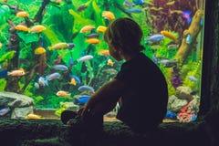 Silhouet van een jongen die vissen in het aquarium bekijken stock fotografie