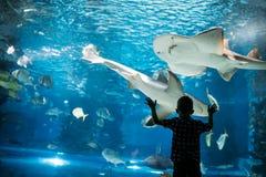 Silhouet van een jongen die vissen in het aquarium bekijken royalty-vrije stock fotografie