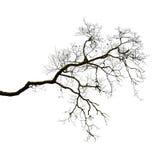 Silhouet van een leafless tak Royalty-vrije Stock Afbeeldingen