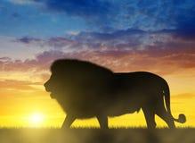 Silhouet van een leeuw Stock Afbeeldingen