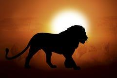 Silhouet van een leeuw in zonsondergang Stock Afbeeldingen