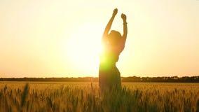 Silhouet van een meisje bij zonsondergang Een jonge vrouw bevindt zich op een Gouden tarwegebied en heft haar handen op vrouw het stock footage