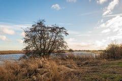 Silhouet van een naakte boom op de bank van een het kronkelen stroom royalty-vrije stock fotografie