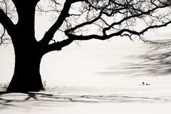 Silhouet van een oude boom stock foto's