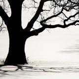 Silhouet van een oude boom in de winter Stock Afbeelding