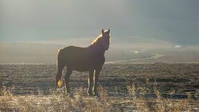 Silhouet van een paard dat zich op een gebied bij zonsopgang bevindt stock afbeelding