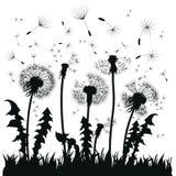 Silhouet van een paardebloem met vliegende zaden Zwarte contour van een paardebloem Zwart-witte illustratie van een bloem Stock Afbeelding