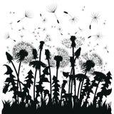 Silhouet van een paardebloem met vliegende zaden Zwarte contour van een paardebloem Zwart-witte illustratie van een bloem Stock Foto