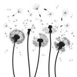 Silhouet van een paardebloem met vliegende zaden Zwarte contour van een paardebloem Zwart-witte illustratie van een bloem Stock Foto's
