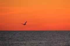 Silhouet van een Pelikaan bij Zonsondergang stock foto