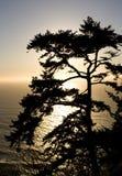 Silhouet van een pijnboom die de Vreedzame Oceaan overziet Stock Foto's