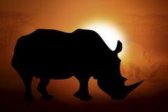 Silhouet van een rinoceros in zonsondergang Royalty-vrije Stock Foto